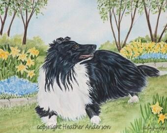 "8x10 Giclee  Print, ""Spring Morning"", Bicolor Shetland Sheepdog,  Hand Drawn, DOG LOVER GIFT, Sheltie Art, dog art print"