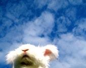 Sky Blue White Bunny Campy Bunny Photography for Home Decor Easter Bunny Nursery Room Art Rabbit Photos Cute Bunny Photos  Childrens Room
