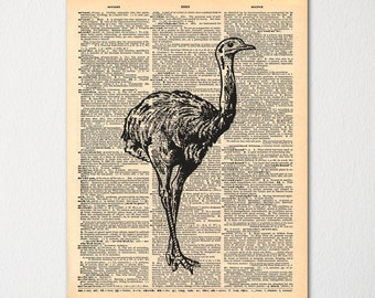 Vintage Ostrich Print on Dictionary Page / Nature Wall Art / Hand Drawn Cabin Decor