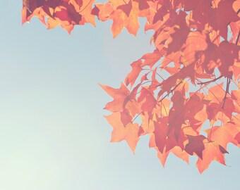 Orange Leaves Color Photo Print { Orange, hazy, blue, sunshine, sunlight, fall, leaves, wall art, macro, nature & fine art photography }