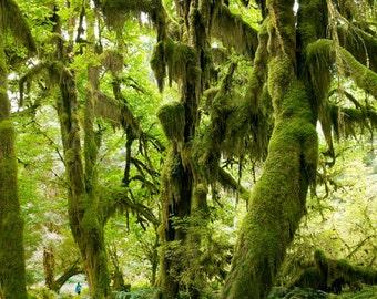 Nature landscape photography - Olympic National Park Rainforest, Washington state.