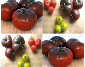 BRANDYWINE BLACK Tomato seeds - HEIRLOOM Bred in the 1800. ~ 90 Days - Great Flavor