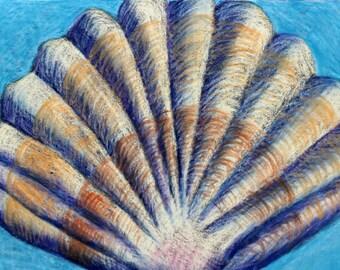 Seashell Drawing- Original 5x7 Pastel Drawing