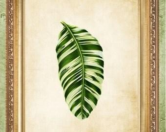 Natural History Print Botanical Art Print Foilage Leaf 1