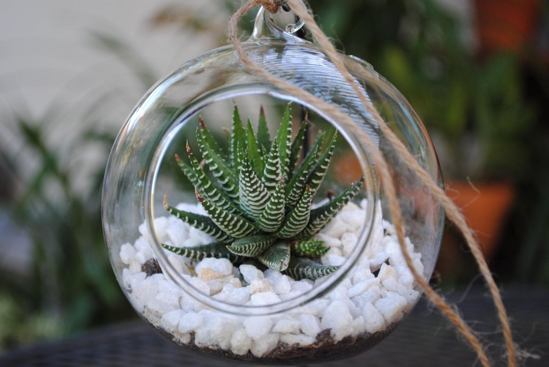 succulent terrarium kit plant terrarium 4 inch glass. Black Bedroom Furniture Sets. Home Design Ideas