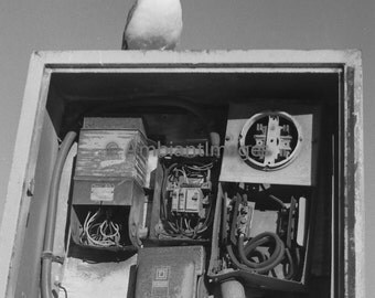 High Tech Bird - Photographic print - wall art - black white - vintage -Home Decor