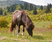 Pony Express at Grayson Highlands