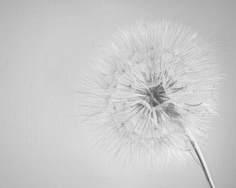 Dandelion print Fine Art Photography Nature photography 8x10 print Wall art Home decor black and white minimalist flower art print