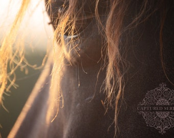 Sun shining radiantly through horse's mane