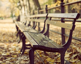 Central Park Bench, Autumn Decor, NYC, Fall Photography, Fall Foliage, Yellow Leaves, Harvest Gold, Yellow - Sitting With The Poets