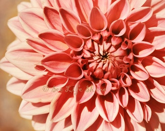 Dahlia print, Pink Bedroom Decor, flower photography, girls wall art, nature photography, flower wall art, pink decor