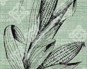 Digital Download Ears of Corn Stalks image Antique Illustration  c. 1900, digi stamp, digis, digital stamp, Indian Corn Autumn Fall