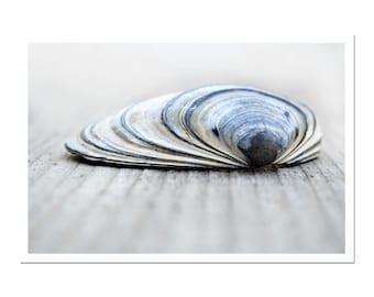 Clam Shell Blue Seashell Print Nautical Art Bivalve Coastal Still Life