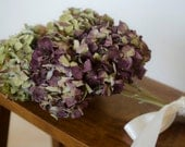 Large bunch of naturally dried burgundy-toned hydrangeas, burgundy hydrangeas, dried hydrangeas, burgundy wedding, wedding decor