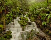 "Forest Nature Photography ""Rainforest Dream"" Green Rainforest Photograph, Olympic Forest, Ferns Moss Fog Photo, Woodland Stream, River Photo"
