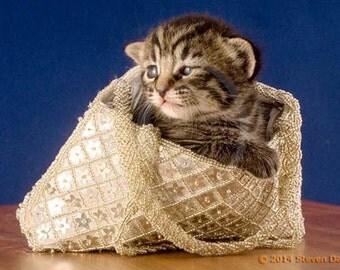 Cute Kitten in purse, Pocket Book Cat, Cat Art