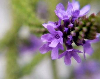 Spun Lavender