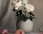 Roses Still Life Fine Art Photography