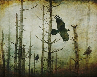 Gothic Black Ravens in the Foggy Mist in an Eerie Forest a Surreal Fantasy Photograph with Texture Overlay