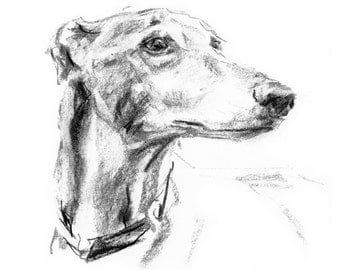 "Greyhound ""Distance"" - fine art dog print"