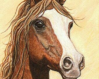 ACEO CARDS, Arabian Horses, Horse Decor, Ellen Strope, Horse Cards, Blank Cards