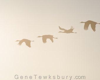 Sand Hill Cranes at Sunset - Wildlife Fine Art Photography - Bird Nature Prints - Bird Migration - Sunset Photo - Unique Modern Home Decor