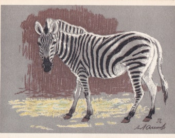 "Postcard Drawing by Laptev ""Zebra"" - 1963, Soviet Artist"
