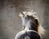 SPIRO, Andalusian Horse, Dapple Grey, Edition Art Print, Wall Decor, Equine Art, Horse photography