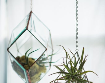 Iridis Prism Terrarium, large -- for air plant terrarium or small succulent -- stained glass -- terrarium supplies -- eco friendly