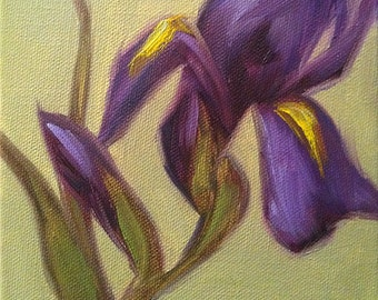 Original Oil Painting Little Purple Iris