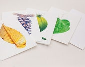 Trees of the Piedmont, Set of 8 Blank Cards and Matching Envelopes, Size A6