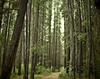 Woods photo, nature photography, trees, fir, path, forest, green, summer, foliage, surreal, 8x12, wall decor, country, under 50