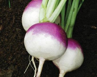 Purple Top White Globe Heirloom Turnip Seeds Non GMO