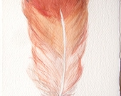 Feather painting. Original watercolor illustration. Pastel coral feather. Small watercolors 7, 5 by 11 inch. Kitchen decor. Home decor.