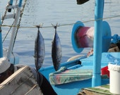 nautical photography- dry fish- fish market at Syros- The Market - fresh fish- boats