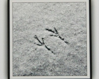 In the Snow, Bird Tracks, Art Photography