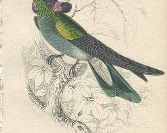 Antique Original Hand Colored Steel Engraved 1830's Book Plate Print Jardine Naturalist Library Plate Ornithology Bird Hummingbird #13