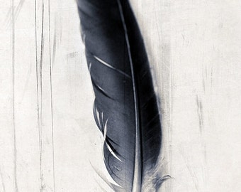 It is written print, black and white quill feather, detail, fine art print, nature home decor, black and white print