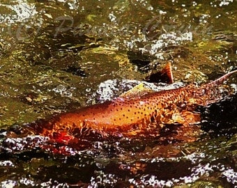 Trout Art: Spawning trout print Cutthroat trout art fish Jackson Hole painting 8x10