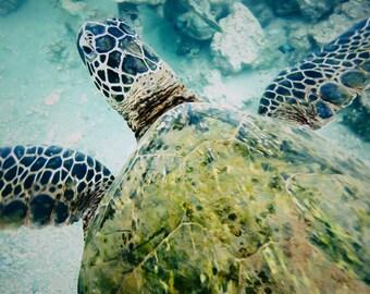 "Hawaiian Art, Sea Turtle, Ocean Photography, Hawaii, Tropical Decor, Surf Decor, Fine Art Print, Blue, Green, Aqua, Poster Wall Art - ""Honu"""