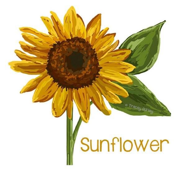 Sunflower Art Original Art sunflower clip art sunflower