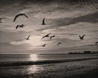 Birds in Flight, Sublime Birds, Beach Sepia Art, Surreal Ocean Sunset, California Photo Art, Birds at Doheny Beach, Dana Point, California