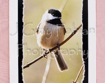 Chickadee, Bird, Photo Note card, Fine Art Photography, Embossed Stationary