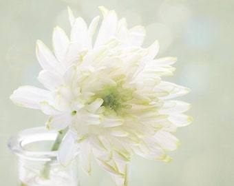Delicate white flower with hints of green