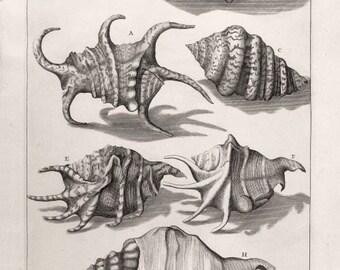 Tropical Shells vintage engraving reproduction