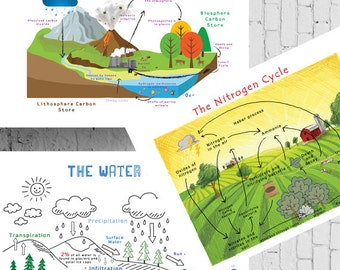 Printable Chemistry Cycles Posters; Carbon Cycle, Nitrogen Cycle and the Water Cycle