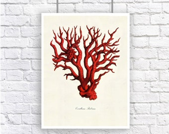 Large Red Coral 3 Nautical Vintage Style Art Print Beach House Decor