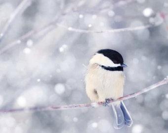 Winter Photography Bird Print, Winter Art, Animal Photography, Nature, Art Print, Woodland Animal, Wall Art, Chickadee in Snow No. 10