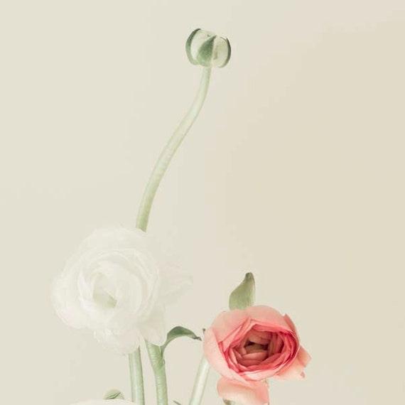 Ranunculus Print, Pastel, Beige, White, Peach, Mint, Flower Photography, Shabby Chic Wall Art