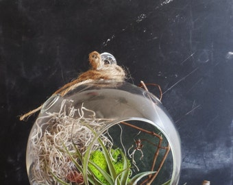 Air Plant Terrarium //  Free Shipping! // Earthy Decor